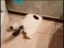 Кот из жидкого металла