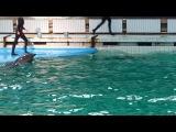 дельфинарий на крестовском 2014