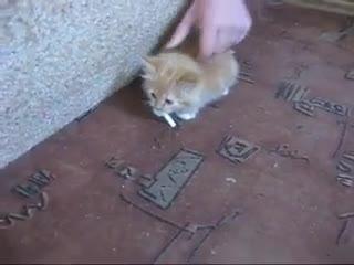 Как отучить кота от курения
