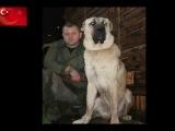 vidmo_org_Tureckijj_Kangal__137701.0