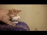 Кот украл деньги. Очень смешно!