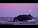 Китовое сафари: самый необычный туризм!