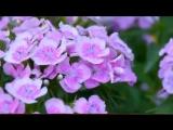 Песня о маме(Тамара Козлова)