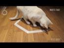 Сверхестественное - кошачая версия (6 sec)