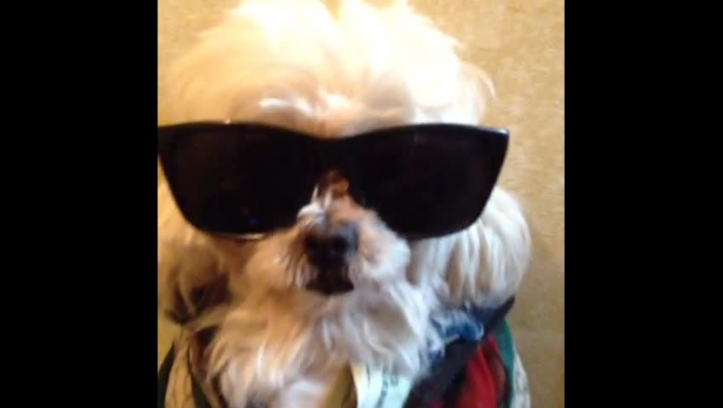 Dinky — where you been dinky dog metime banger 2chainz vine