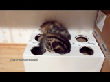 Funny Cats _ Kittens and a Box ( homemade free toy )
