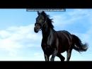 «лошадь» под музыку Детский хор - Далеко, далеко ускакала в поле молодая лошадь :D. Picrolla