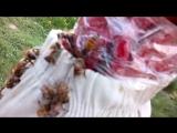 Пчелы лезут под рукав, а там уже скотч, хе-хе:)