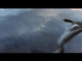 Документальный фильм Птицы (Le peuple migrateur)