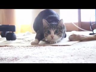 Cat twerk trap - Beauty Brain x Subshock -- Drunk Fighters
