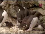 BBC Мир природы
