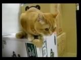 Кот с нетерпением ждет того самого момента