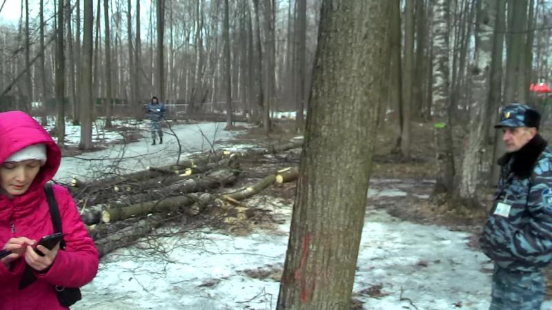 лесорубы в лесу Троицка 12 марта 2015