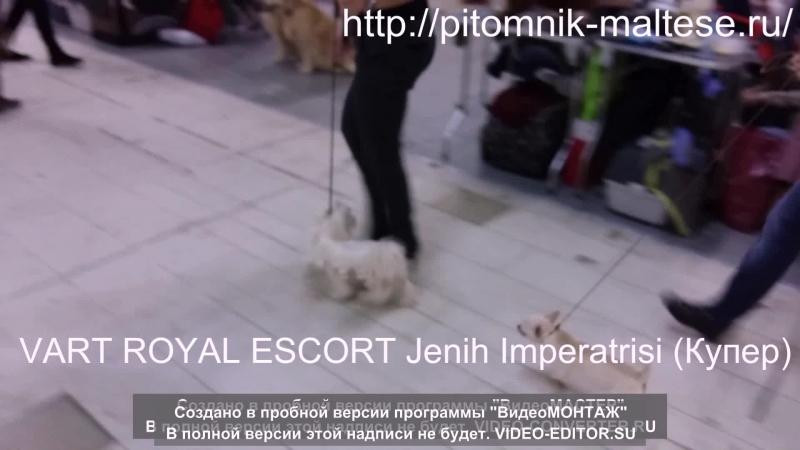 VART ROYAL ESCORT Jenih Imperatrisi (Купер) д.р. 07.05 2014