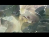 Elliot Goldenthal &amp Lara Fabian - The Dream Within (OST Последняя фантазия Духи внутри)
