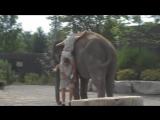 Слоняра.