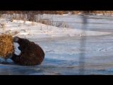 Этот медведь никогда не был так счастлив ))))
