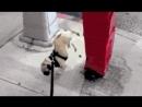 Собака-обоссака