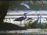BBC Мир Природы. Муссон / The Natural World. Monsoon