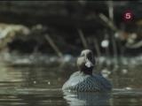 BBC Мир Природы. Итен - заповедный лес / The Natural World.