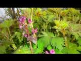 Весна! Весна! И всё ей радо! под музыку Вангелис - La Petite Fille De La Mer. Picrolla
