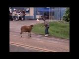 Животные. баран бодает всех подряд