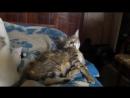 Котята: Синхронное умывание!))