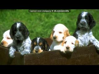 «Со стены собачки и шенята» под музыку Песня для лучшей подруги! - веселая песенка для тебя про нас!!! Не грусти! Все будет хоро