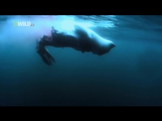 Суперхищники 1 (Большая белая акула)