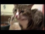 Няшное видео про долго чихающих котиков
