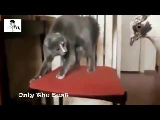 Приколы с кошками 2014 супер приколы над животными Best Compilation