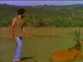 Документальный сериал Дикий мир : Обезьяны Шри-Ланки / Monkeys Of Sri Lanka.