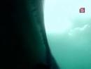 BBC Мир природы Большая белая акула. Живая легенда / Great White Shark. A Living Legend. 2009