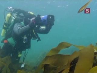 BBC Мир Природы. Тюлени - покорители морей / The Natural World. Seals Invaders of the Sea