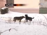 В Воскресенске зафиксирован случай бешенства у бродячей собаки 18.03.2015