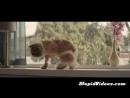 Неугомонный кот