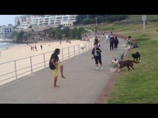 Суровая бразильская собака )))классное видео как собака играет в футбол.