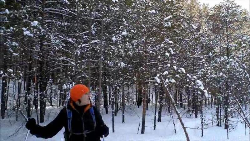 Кайдаловка-Кисловка лыжи 1 марта