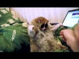 Лори — самые милые животные в мире!ания