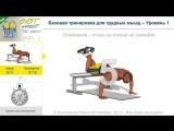 P4p - тренировка для грудных мышц (1 уровень)