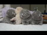 сонные котята (Not Vine)