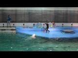Дельфинарий на крестовском!
