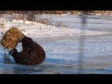 Этот медведь никогда не был так счастлив ^_^