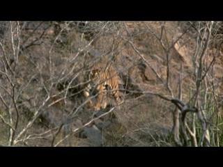 Animal Planet and Discovery Дикая Азия : Муссон - бог жизни / Wild Asia:Monsoon Indias god of life. (1999)(США)