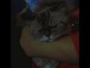 Моё котэ :3