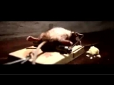 Funny Mouse Nolan Cheese Commercial