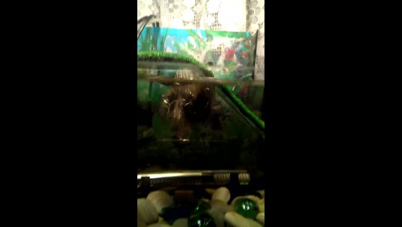 Une tortue plonge dans l'eau