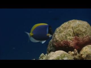 BBC. Голубая планета. (6) Коралловые моря