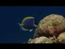 BBC Голубая планета 6 Коралловые моря