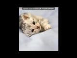 Котики под музыку Детские песни - про кота!=)) vkhp.net - Песня СУПЕРРР смешная!!!!. Picrolla